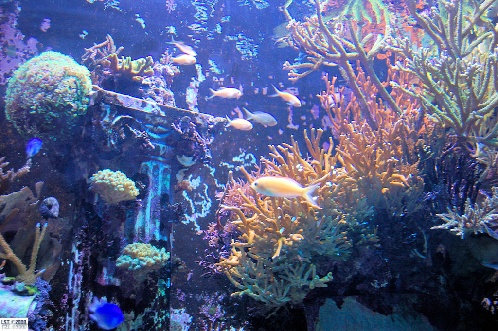 Journey to Atlantis Aquarium
