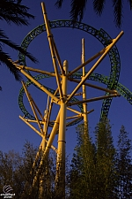 Cheetah Hunt
